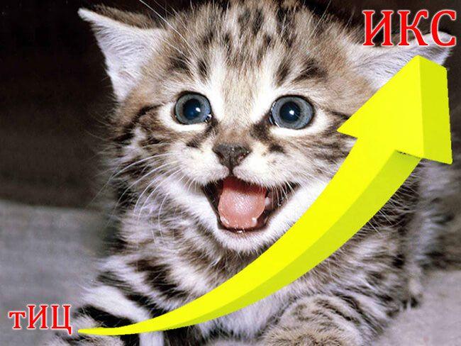 Котики всегда популярны