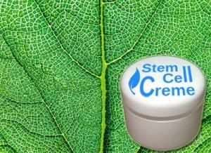 Крем с растительными стволовыми клетками